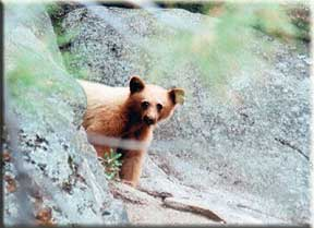 Bear Spray Testimonial